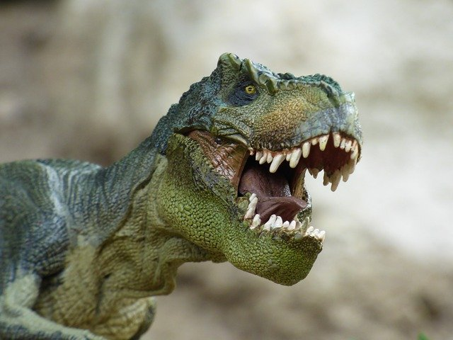 A close up of a reptile with its mouth open